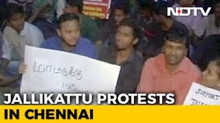 Jallikattu: 5,000 Gather At Chennai's Marina Beach For Overnight Protests