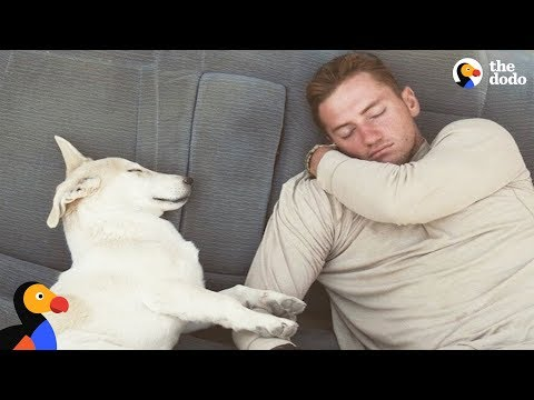 Sweet Dog Rescued by Marine In Afghanistan | The Dodo