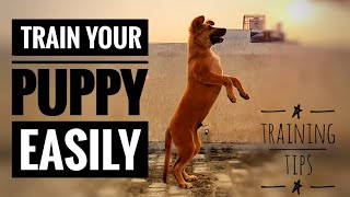 Puppy Training Tips/ Dog Training tips/ Follow these tips and train your puppy at home.