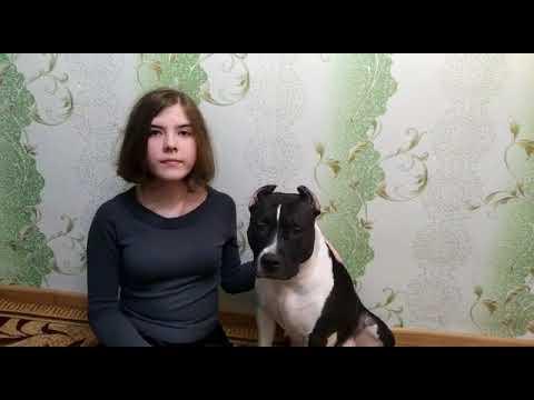Изображение предпросмотра прочтения – ЕкатеринаБурак читает произведение «Собаке Качалова» С.А.Есенина