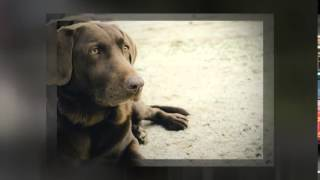 Buckingham, Pa 18912 Dog Basic Obedience - Bob's Pet Stop, Inc.