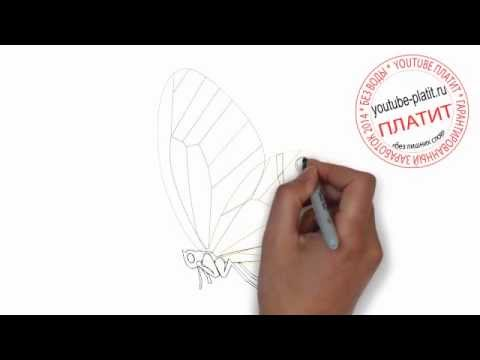 Картинки бабочек для детей steshkaru