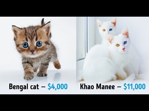 TOP 19 Awesome Cats That Cost a Fortune