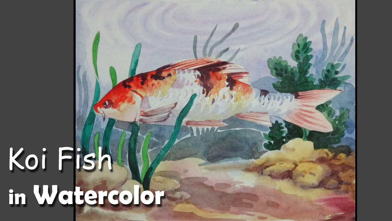 How to paint a koi fish in watercolor youtube for How to paint a fish