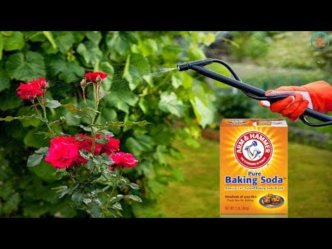Best Uses For Baking Soda In The Garden