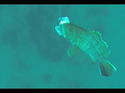 Gopro troll pro 3 footage fishing for black sea bass at for Frying pan tower fishing