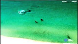 Hammerhead shark close call caught on camera
