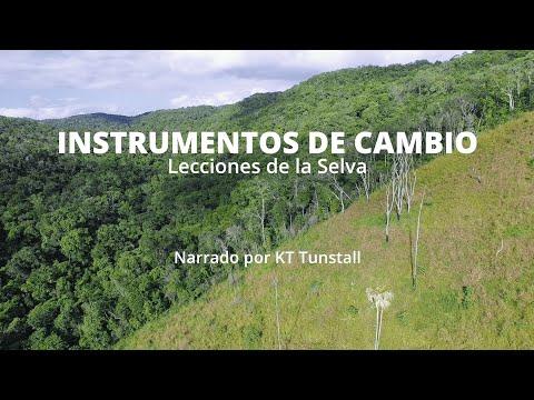 Instrumentos de Cambio: Lecciones de la Selva