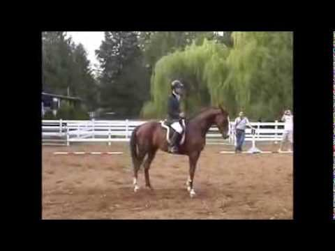 No Reins Dressage movements - Dont Try this at home!