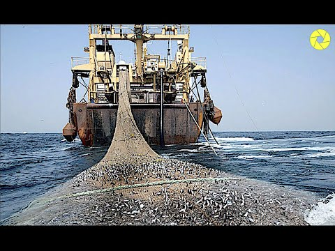 Big Fish Catching In The Deep Sea | Modern Fish Processing Line | Catch And Process Right On Ship