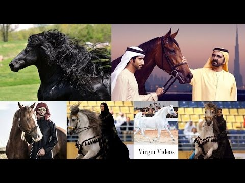 Beautiful Black & Gold Horse in Dubai   Emirates Royal Family Garden & Jumeirah beach