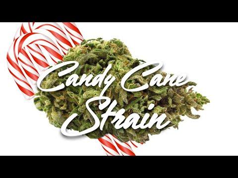 Crop king seeds strain candy cane grower marijuana king
