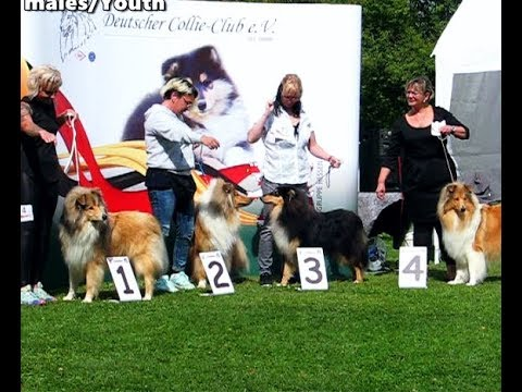 COLLIE Rough  Dog Show SRA Bad Soden 20.08.2017 [part1of2] thumbnail