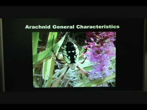 Spider Class 101: A Spider\'s Anatomy - YouTube