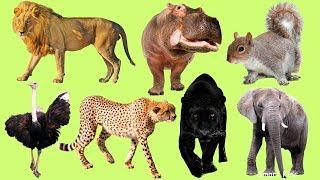 Животные для детей | Учим название и голоса животных Африки| Учим животных Африки | Звуки животных