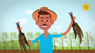 Agrotik - Video explicativo