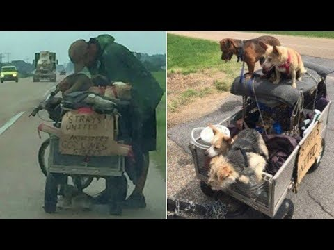 A Homeless Man Was Found With A Cart Full Of Dogs. What They Did About It Will Touch Your Heart