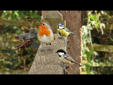 Birds Singing On The Gate - A Video for People, Cats and Dogs