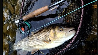 Fly fishing for chub|Chub on streamer|Fly fishing Croatia