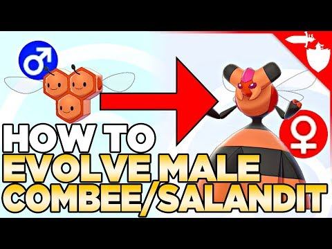 How To Evolve Male Combee & Salandit in Pokemon Sword and Shield