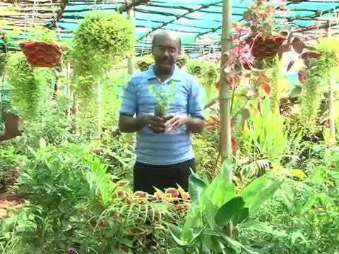 Malarum Bhoomi   Enga Veetu Thottam 'Mr Joseph Bastin from RSM Kashvika Nursery Garden Thiruvaiyaru'