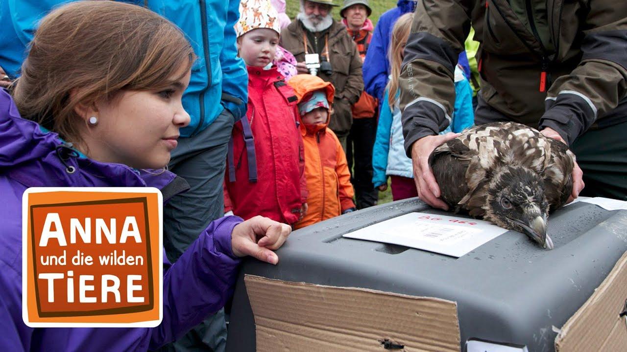 Knochen Fur Den Bartgeier Doku Reportage Fur Kinder Anna Und Die Wilden Tiere Youtube