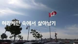 [캐나다 Vlog] 캐나다 브이로그/허리케인 대비/도리…
