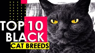 TOP 10 BEST BLACK CAT BREEDS