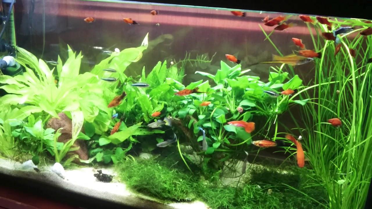 Comida peces agua fr a y tropicales diferencias youtube for Alimentacion para peces de agua fria