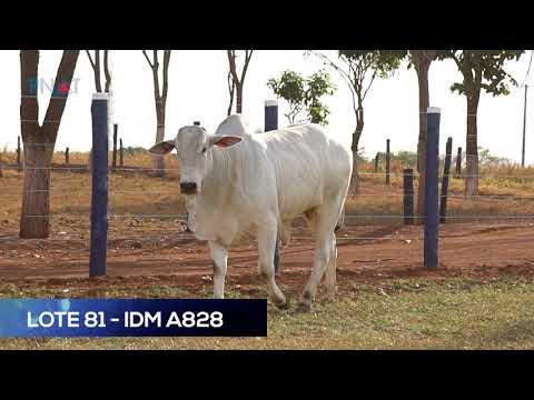 LOTE 81 - IDM A828 - NELORE