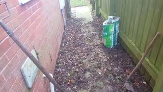 How to get rid of ivy.  Plus 4 tips