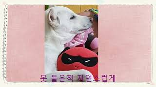 [ 111 ]   예쁜 침대가 생겼어요~~^^