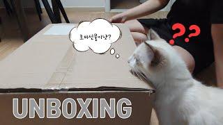 대형 선물세트를 마주한 아기고양이 로미의 반응은??