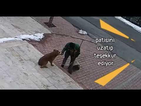 Malatya'da Temizlik İşçisiyle Köpeğin Dostluğu