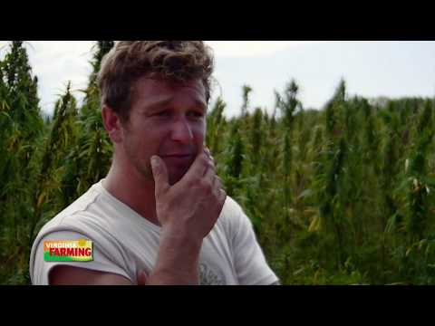 Virginia Farming: Industrial Hemp Trials