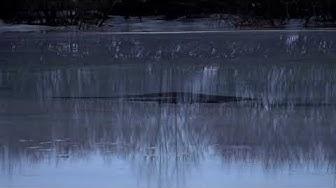 Kyrönjoen tulvavahti 16.2.2020