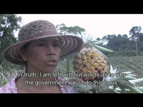 Aerial spraying of coca routinely destroys legitimate food crops.