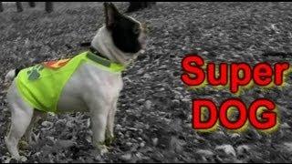 Собака супергерой (фильм-сказка)