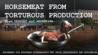 Enquête : les importations de viande chevaline depuis l'Amérique du Sud