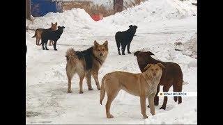 В Красноярске пробуют по-новому решить проблему бездомных животных