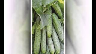 семена овощей в интернет магазине(, 2015-02-04T22:59:28.000Z)