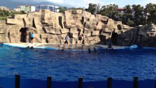 Дельфинарий г.Батуми, потрясающее шоу дельфинов