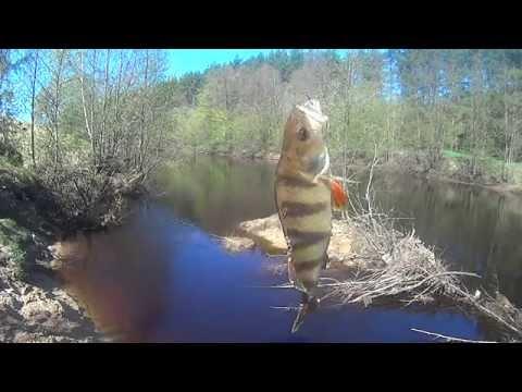рыбалка в мае на кружки