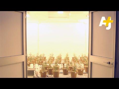 Inside The Italian Army's Marijuana Lab