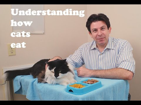 Understanding how cats eat
