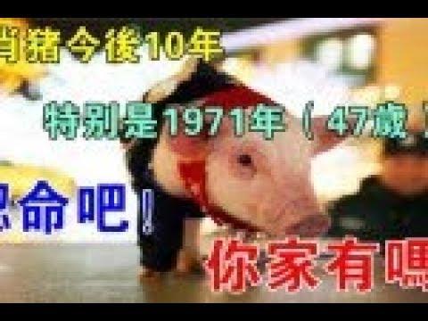生肖豬今後10年:特別是1971年(47歲)的,認命吧!你家有嗎?
