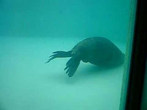 aquarium peru