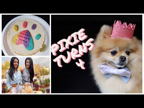 My Dog's EPIC Birthday!!!! | Pixie The Pom Star | Pixie Turns 4 |Social Cravings| Shivani Trehan