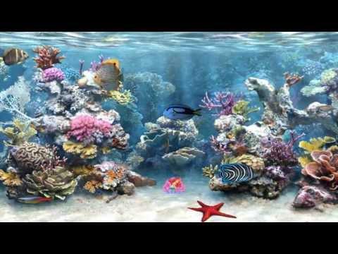 Clear Aquarium Animated Wallpaper Http://www.desktopanimated.com/