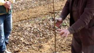 Repeat youtube video Tehnička obuka- zimska rezidba/ Technical training- winter pruning